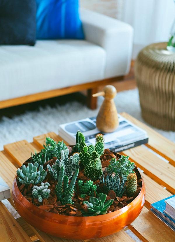 Vasos para suculentas especies diferentes