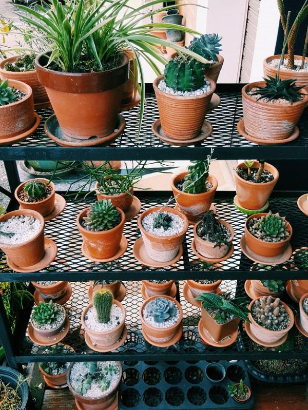 Vasos para suculentas de barro