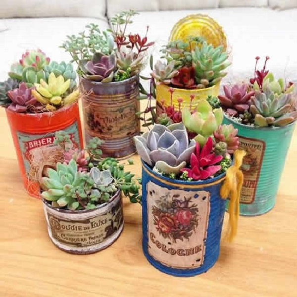 Vasos para suculentas latas coloridas