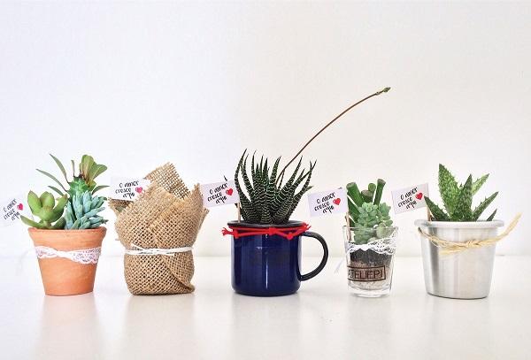 Vasos para suculentas mini vasos