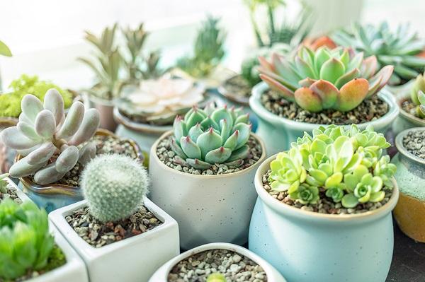 Vasos para suculentas plantas diversas