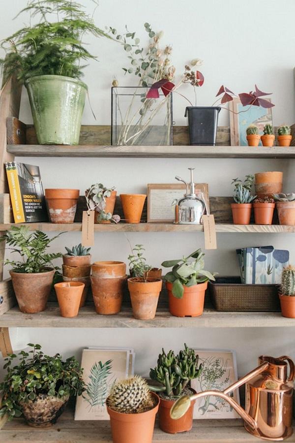 Vasos para suculentas vasos na estante