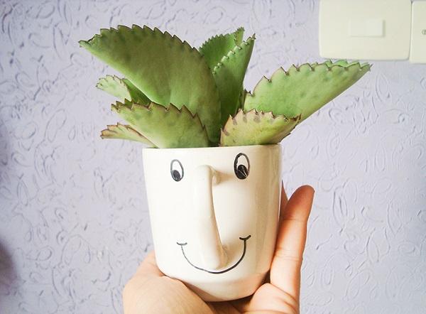 Vasos para suculentas xícara