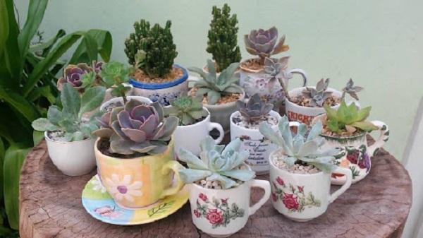 Vasos para suculentas xícaras diversas