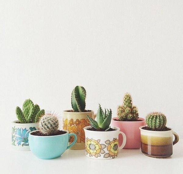 Vasos para suculentas xícaras