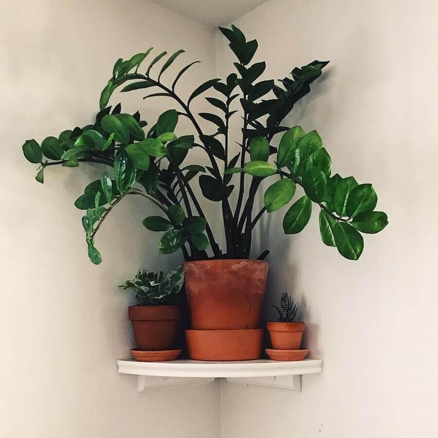 decoração com vasos de plantas para prateleira de canto branca Foto Webcomunica