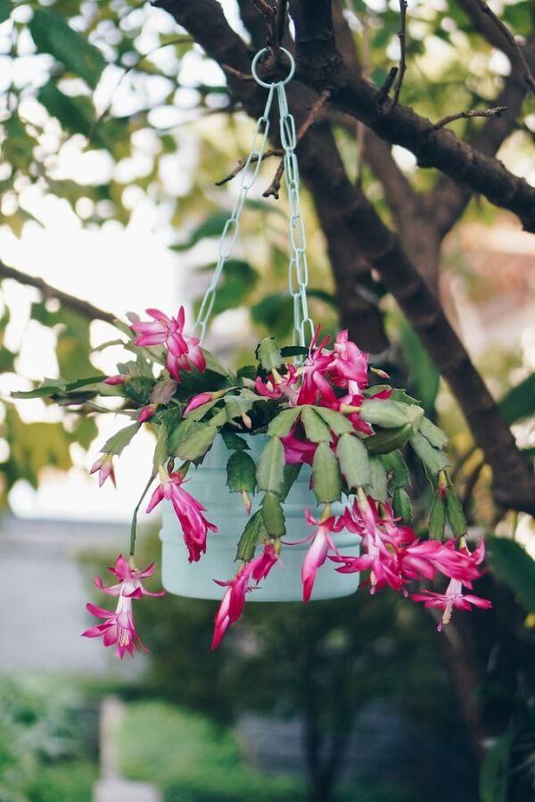 flores de maio vaso suspenso