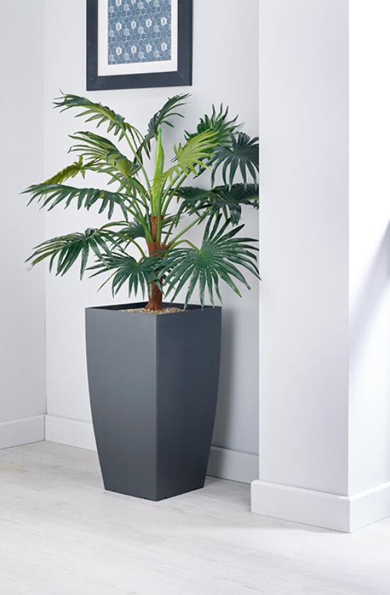 Palmeira leque em vaso cinza