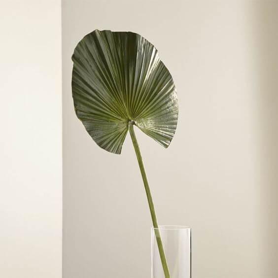 Cultive a palmeira leque em ambientes iluminado