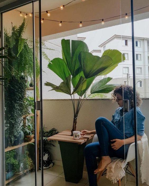Palmeira leque na varanda