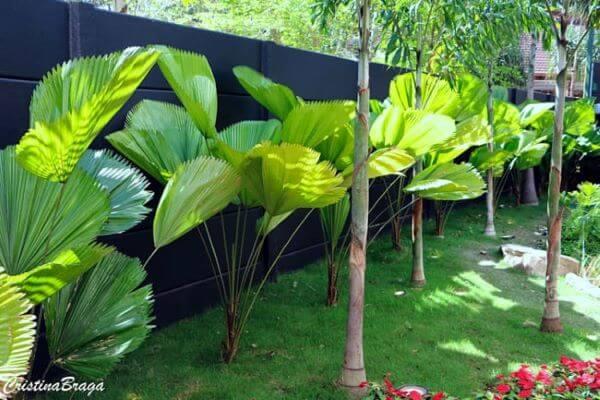 Jardim decorado com palmeira leque