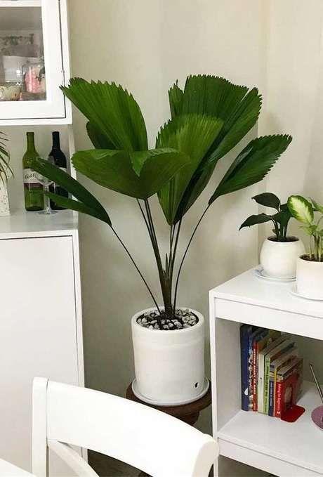 Sala de estar decorada com palmeira leque
