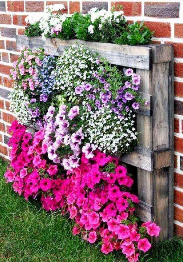 As flores que gostam de sol deixam o jardim externo colorido