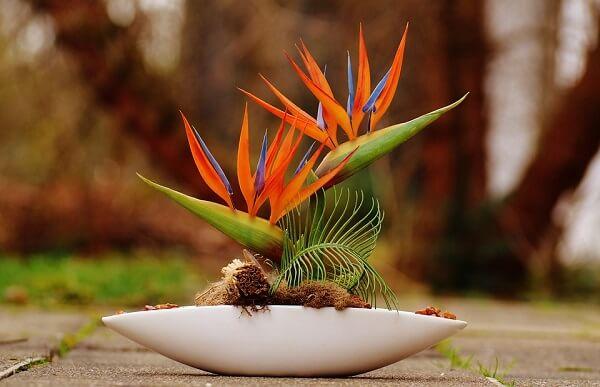 A Ave do Paraíso é uma das flores que gostam de sol
