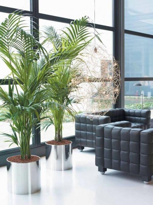 Coqueiro de jardim da espécie areca-bambu decora o ambiente