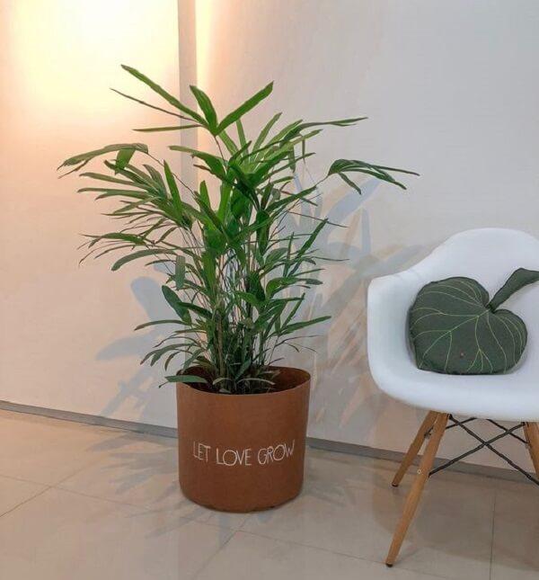 Coqueiro de jardim em vaso criativo decora o ambiente