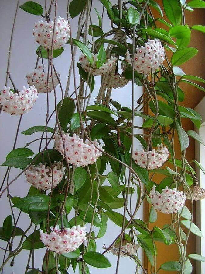 Flor de Cera Foto Pinterest