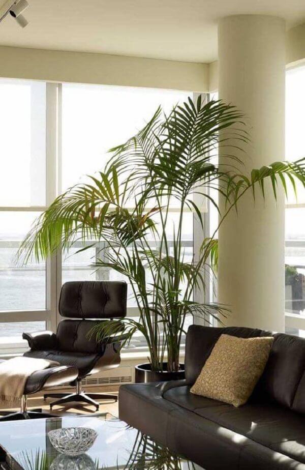 Há quem misture a palmeira ráfia com outras espécies de palmeira
