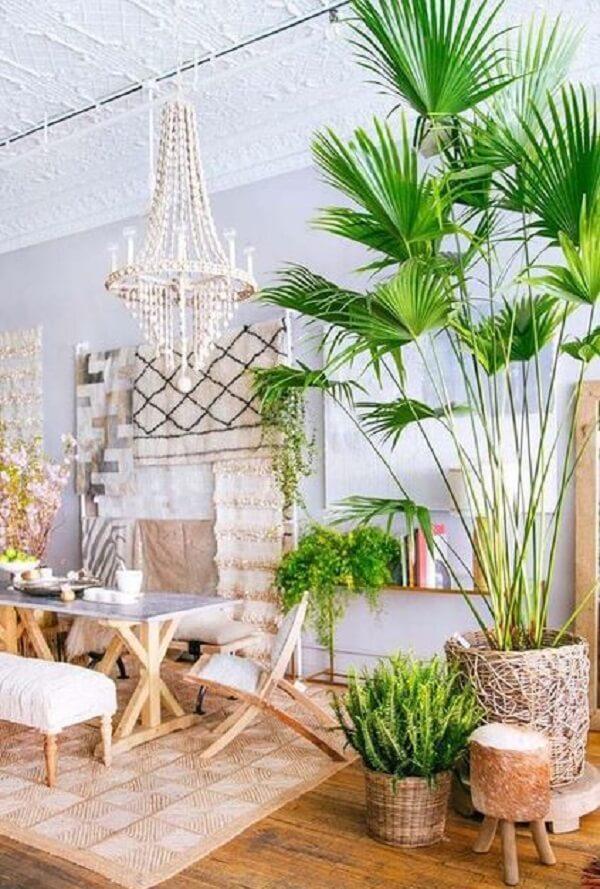 O coqueiro de jardim da espécie ráfia pode crescer muito