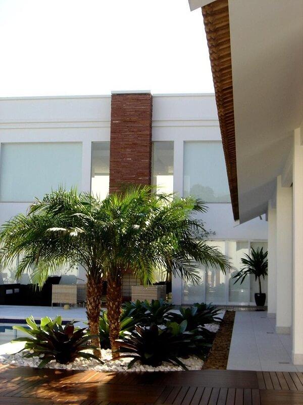 O coqueiro de jardim complementa o projeto paisagístico com as bromélias