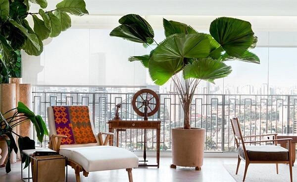 O coqueiro de jardim da espécie leque decora essa varanda ampla