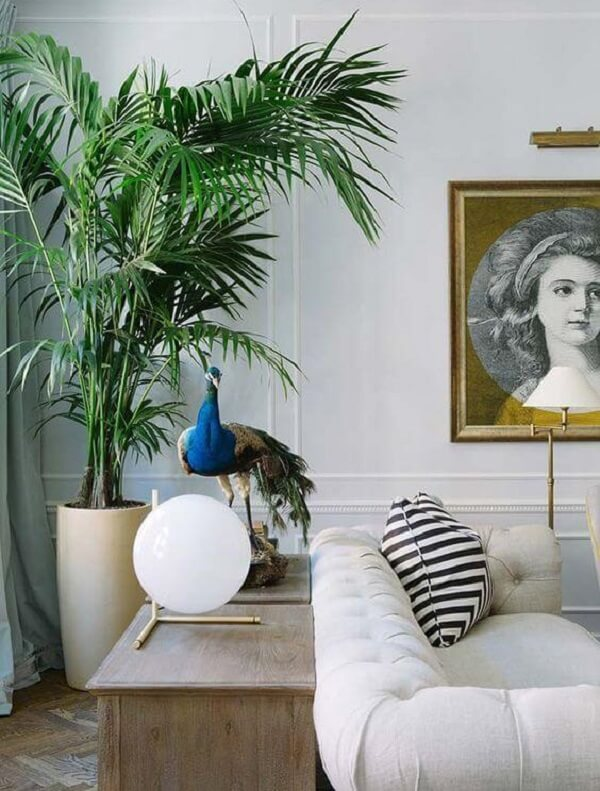 Salas clássicas ficam ótimas com coqueiro de jardim da espécie Ráfia