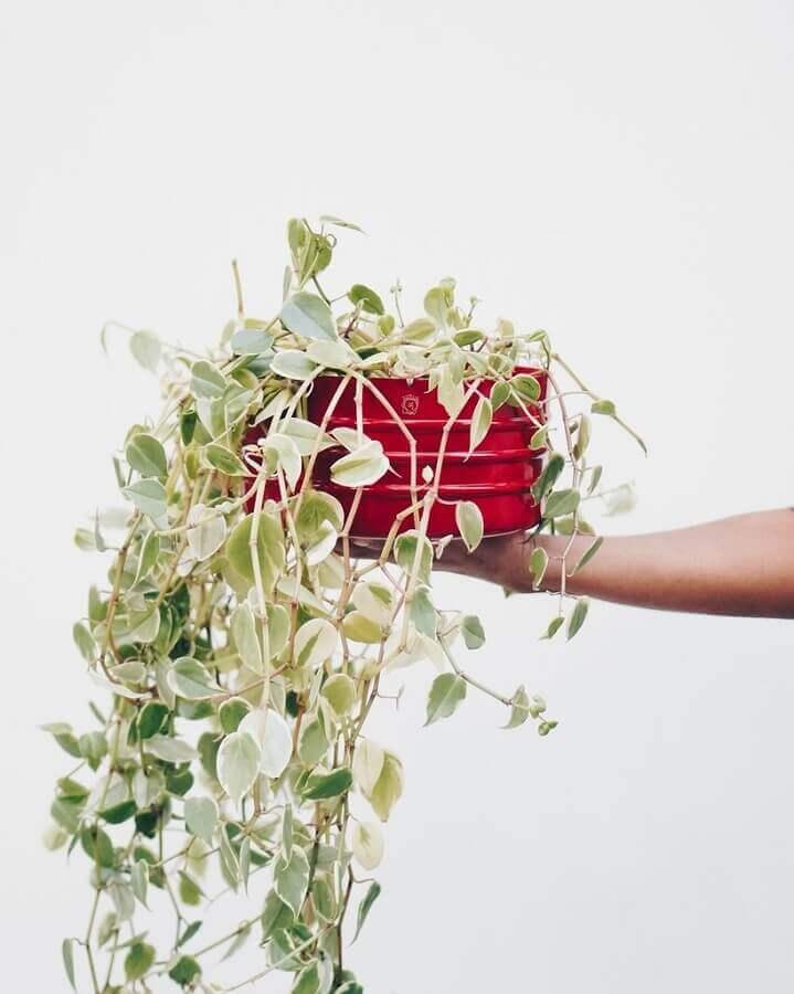Vaso com plantas pendentes Foto Pinterest