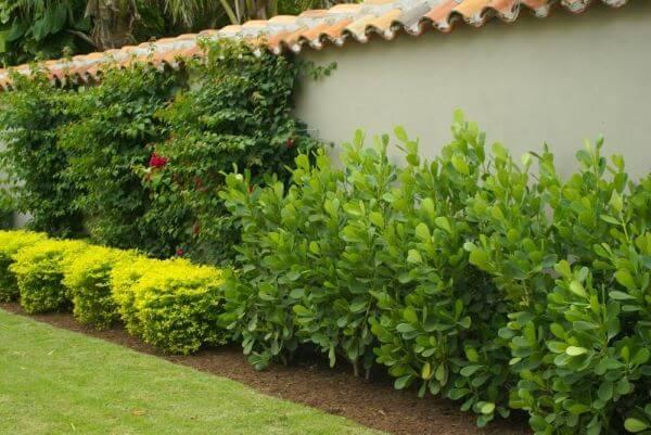 Cerca viva no jardim