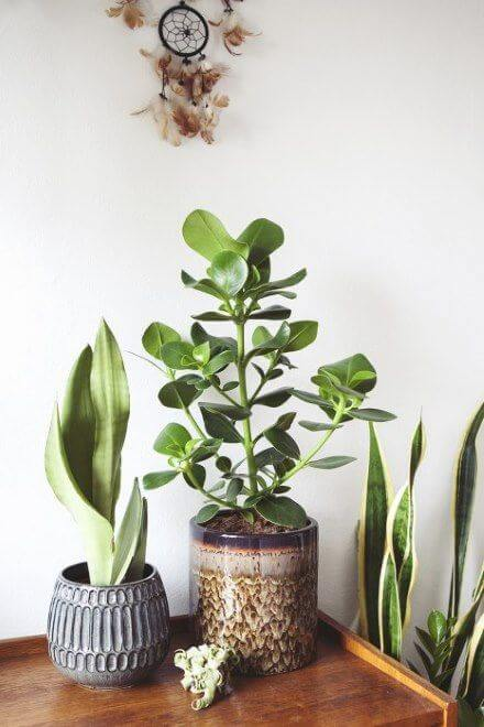 Vasos decorados com clusia