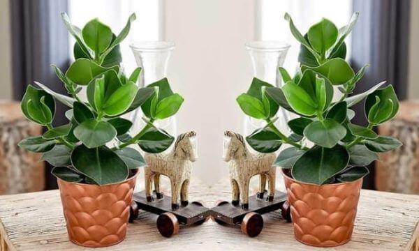 Casa decorara com vasos de plantas