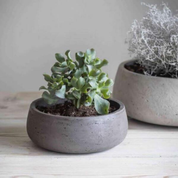 Vaso de cimento para plantas pequenas de jade
