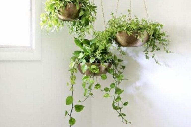 decoração com plantas pendentes  Foto Histórias de Casa