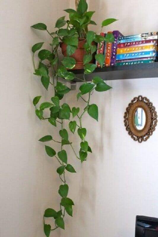 plantas pendentes para decoração