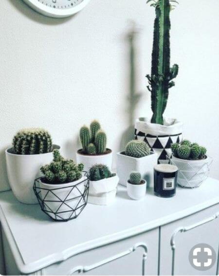 Plantas pequenas com vaso preto e branco