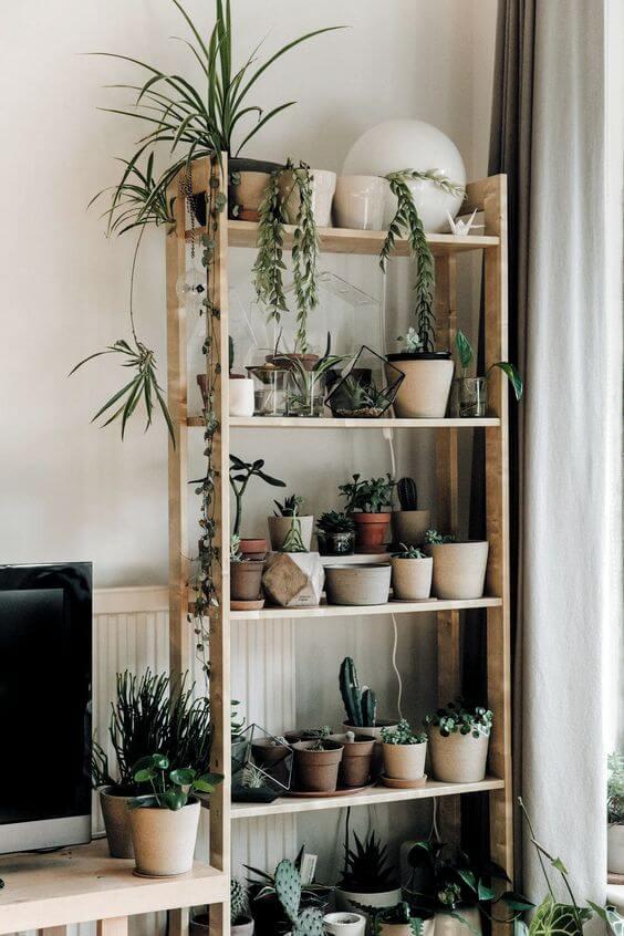 Decore a estante com vasos de plantas pequenas