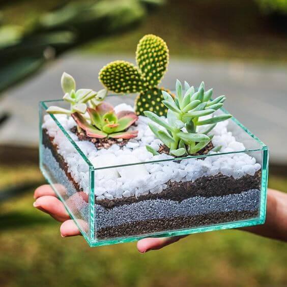 Vaso de vidro para plantas pequenas