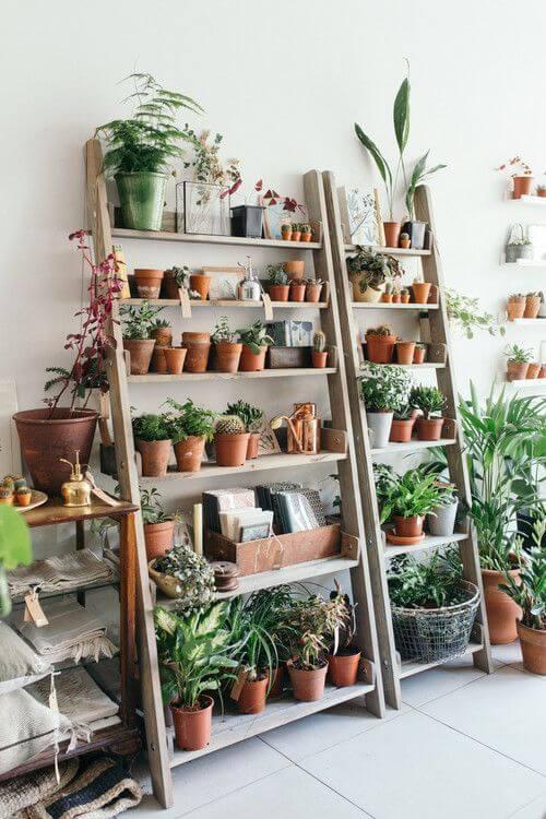 Plantas pequenas para apartamento rustico