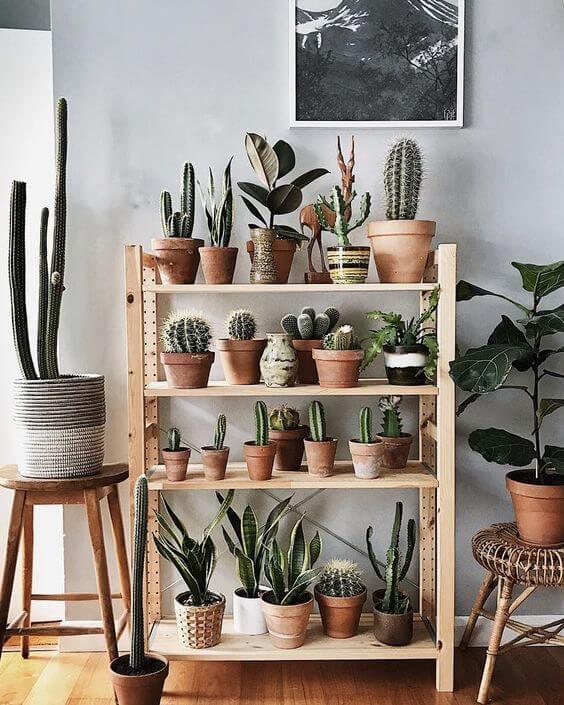 Plantas pequenas para casa com mini cactos na estante