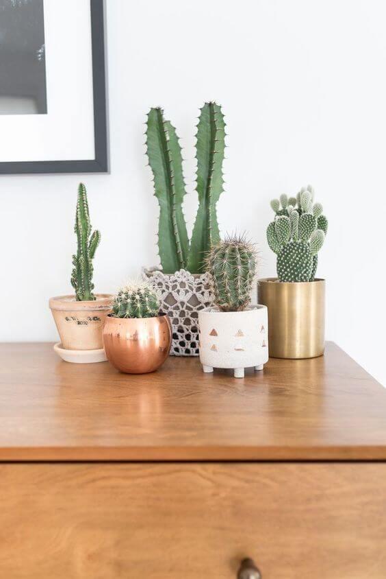 Plantas pequenas para quarto decorado