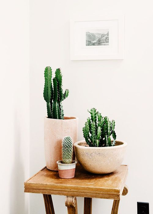 Plantas pequenas para decorar a casa moderna