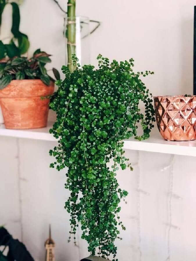 prateleira branca decorada com plantas pendentes Foto Pinterest
