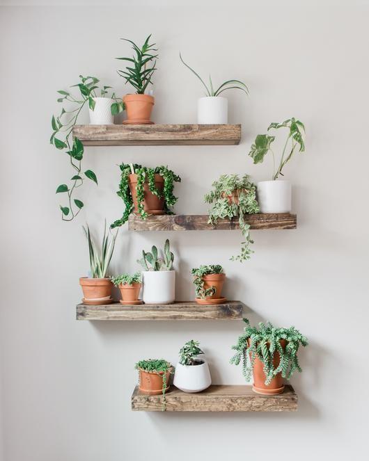 As plantas pequenas ficam lindas nas prateleiras