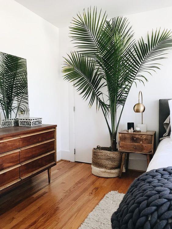Quarto com vaso grande de plantas e móveis de madeira