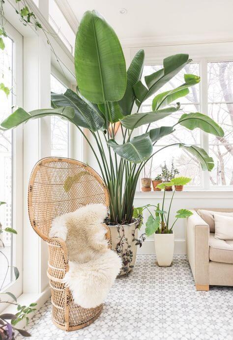 Sala iluminada com vaso grande de plantas