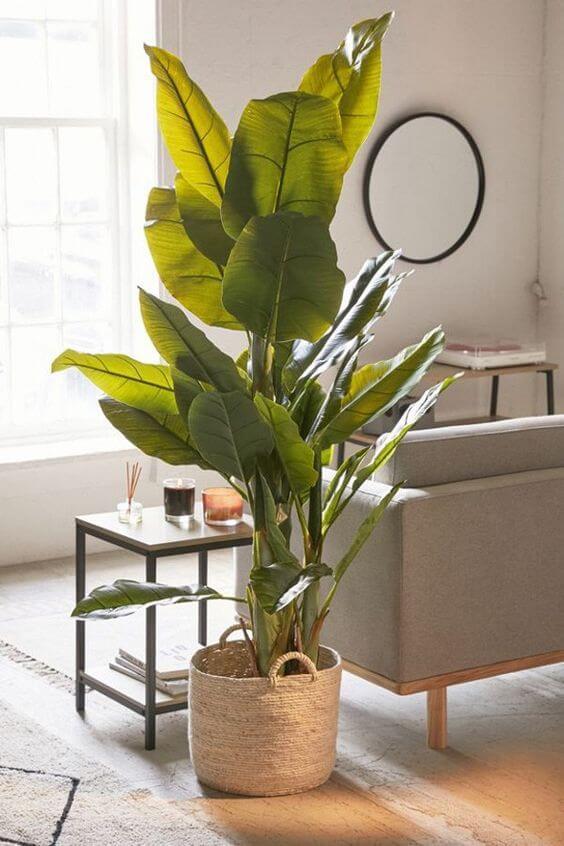 Sala moderna com vaso grande para planta