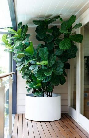 Varanda com vaso grande e planta alta na sacada