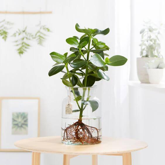 Que tal usar o vaso de vidro para decorar a casa?