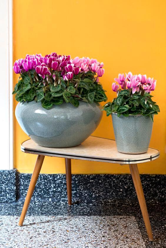 Vasos de plantas pequenas cyclane
