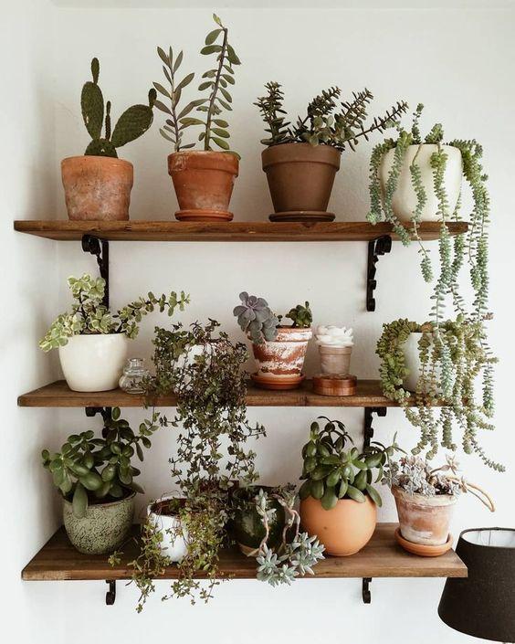 Vaso de plantas pequenas na prateleira de casa