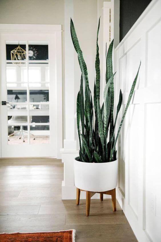 Vaso grande branco com planta espada de são jorge
